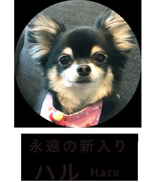 ハル Haru